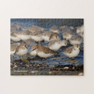 A Day for Dunlins and Sanderlings Jigsaw Puzzle