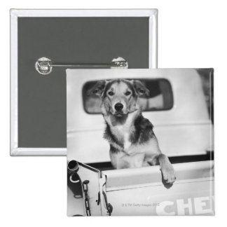 A dog in a car. 2 inch square button