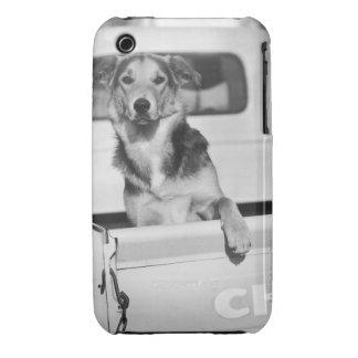 A dog in a car. iPhone 3 cover