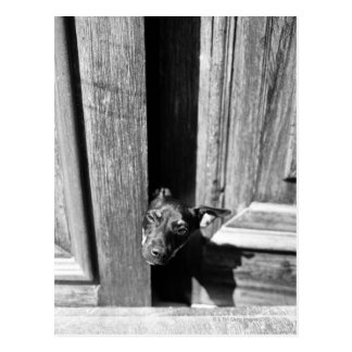 A dog peeking out from a door, close-up. postcard