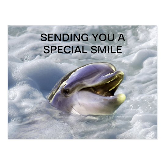 A dolphins best smile postcard