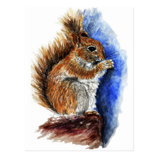 A Douglas Squirrel, watercolor pencil Postcard