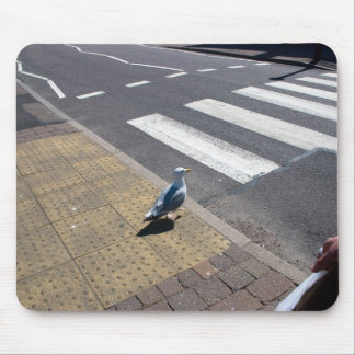 A dove on the crosswalk mouse pads
