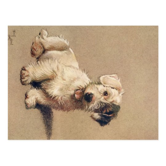 A Dozen Dogs or So Cecil Aldin Postcard
