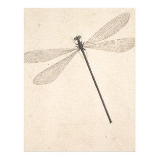 A Dragonfly, by Nicolaas Struyk, early 18th c. Letterhead