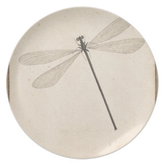 A Dragonfly, by Nicolaas Struyk, early 18th c. Plate