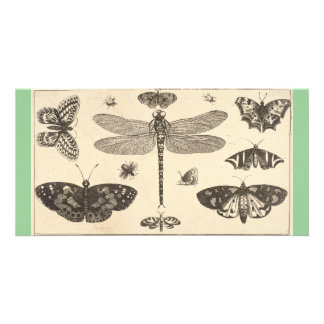 A dragonfly, ladybirds, and butterflies photo card template