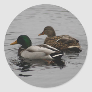 A Drake and a Hen Classic Round Sticker