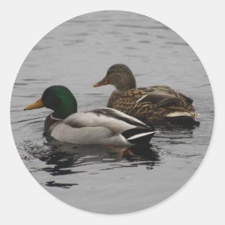 A Drake and a Hen Round Sticker