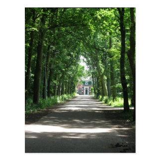 A Dutch Lane in Forrest in Holland Photo Postcard