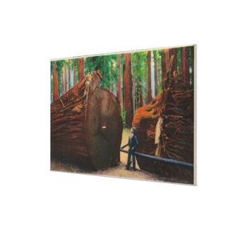 A Fallen Giant, Humboldt State Park Gallery Wrapped Canvas