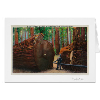 A Fallen Giant Humboldt State Park Card