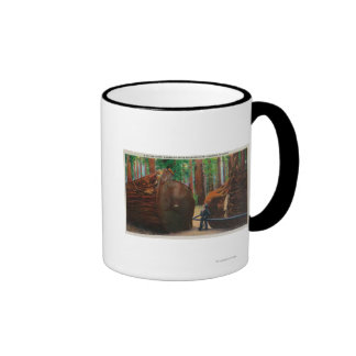 A Fallen Giant, Humboldt State Park Mugs