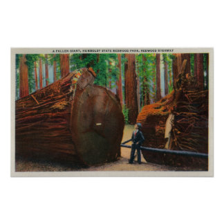 A Fallen Giant, Humboldt State Park Posters