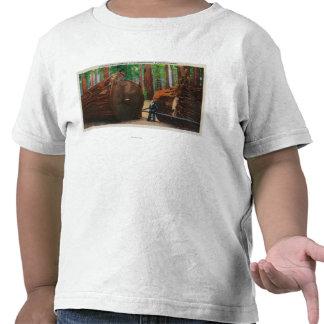 A Fallen Giant, Humboldt State Park Shirt