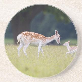 A Fallow Deer (Doe) with Fawn Coaster
