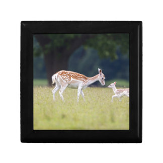 A Fallow Deer (Doe) with Fawn Gift Box