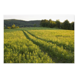 A farm road in Sabins Pasture in Montpelier, Photo Print