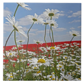 A farmland field of white ox-eyed daisies and 2 ceramic tiles