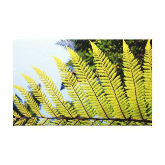 A fern frond canvas print