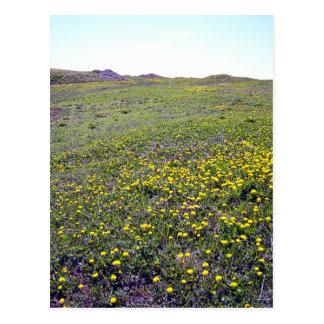 A Field Of Dandelions Postcard