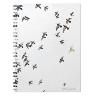 A flock of birds is flying at the sky notebooks