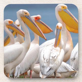 A Flock Of Pelicans Coasters