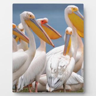A Flock Of Pelicans Plaque