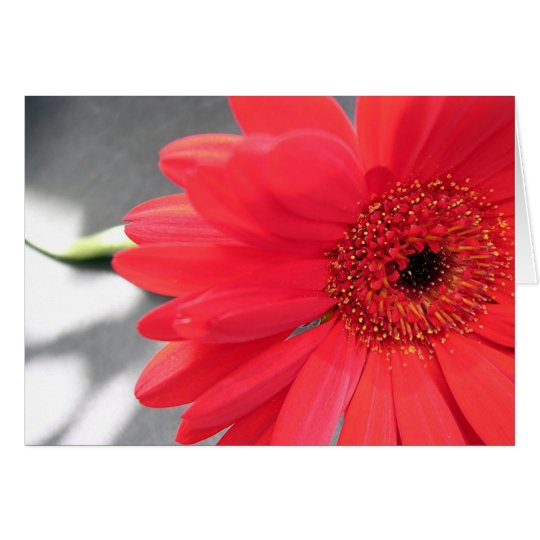 A Flower for you Card
