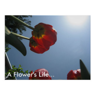 A Flower s Life Poster