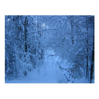 A Forest in Winter Postcard