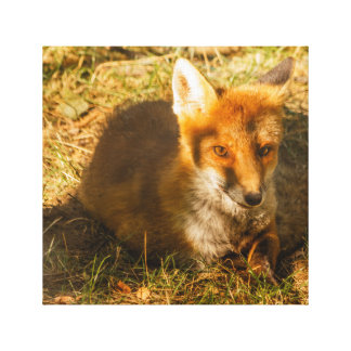 a fox resting in a park on premium wrapped canvas