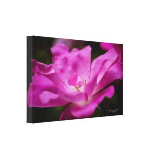 A fuchsia rose canvas print