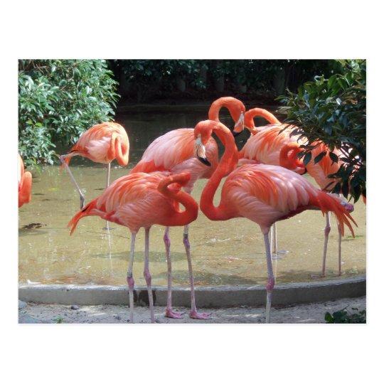 A Gaggle Of Flamingos Postcard