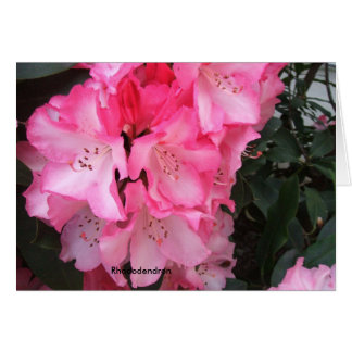 A Gala Rhododendron Explosion Card