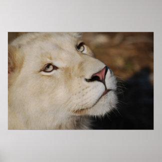 A gentle lion print