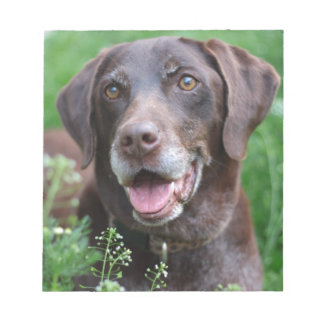 A German Shorthaired Pointer dog in the grass Notepad