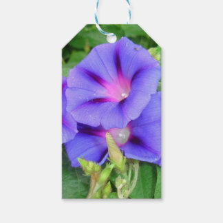 A Glorious Collection of Purple Ipomoea Gift Tags