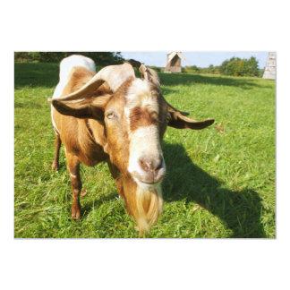 A goat - invitation