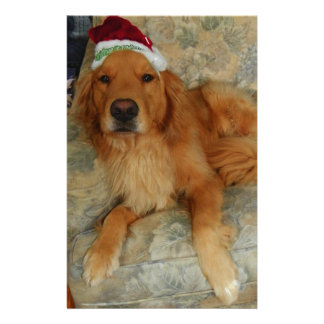 A Golden Retriever at Christmas with Santa Hat Stationery
