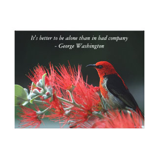A gorgeous red & black bird on wrapped canvas