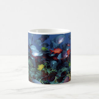 A Great Diversity of Fish at Pearl & Hermes Atoll Classic White Coffee Mug