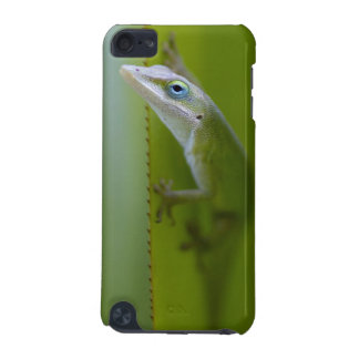 A green anole is an arboreal lizard iPod touch 5G cover
