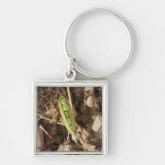 A Green Pea Pod On A Dried Pea Pod Plant Keychain
