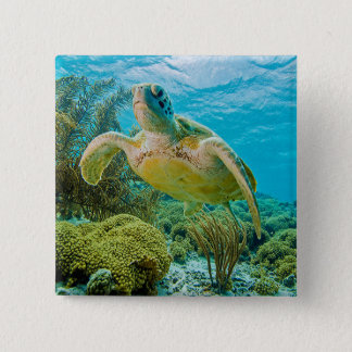 A Green Turtle On The Shallow Reefs Of Bonaire 2 Inch Square Button