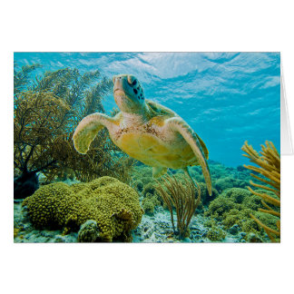 A Green Turtle On The Shallow Reefs Of Bonaire Card