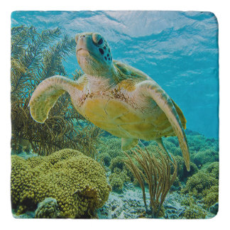 A Green Turtle On The Shallow Reefs Of Bonaire Trivet
