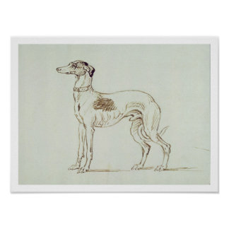 A Greyhound, Facing Left (pen & ink on paper) Poster