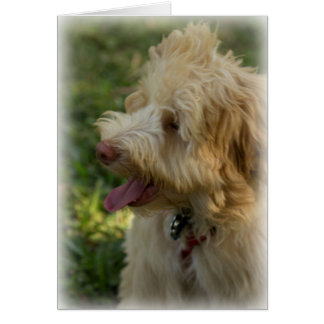 A happy labradoodle card