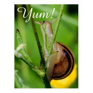 A Happy Snail Eats A Leaf! Postcard